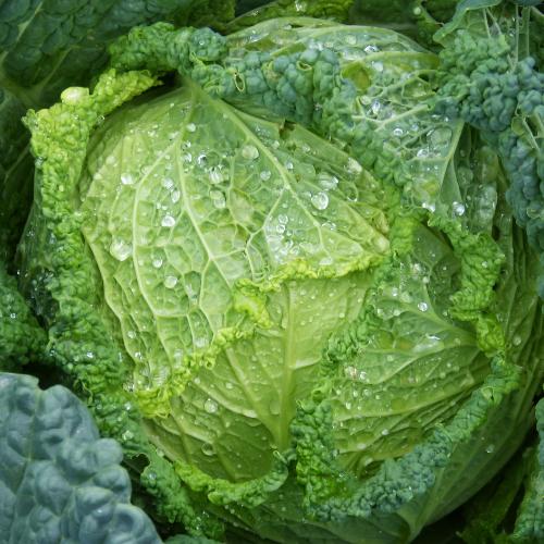 Gezonde voeding kan Aften genezen